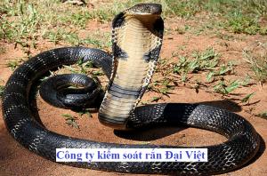 cong-ty-bat-ran-tai-nha