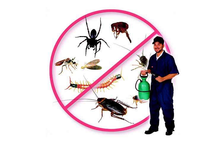 Diệt côn trùng