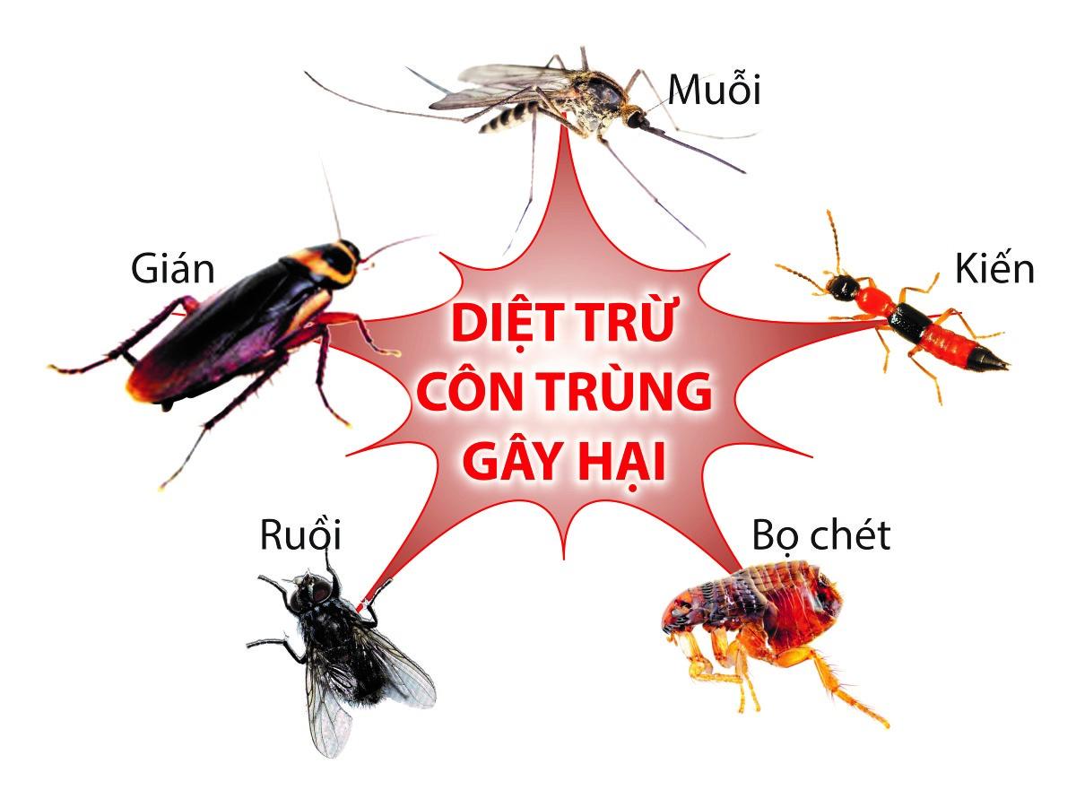 diệt côn trùng tại Nghệ An