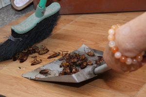 Công ty diệt côn trùng tại Phú Thọ