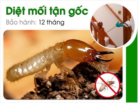 Công ty diệt côn trùng tại Thành phố Hà Nội