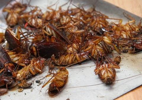 Công ty diệt côn trùng tại Vĩnh Phúc