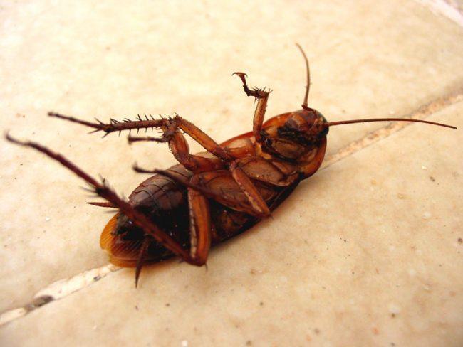 Công ty diệt côn trùng tại An Giang