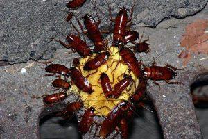 Công ty diệt côn trùng tại Thái Bình