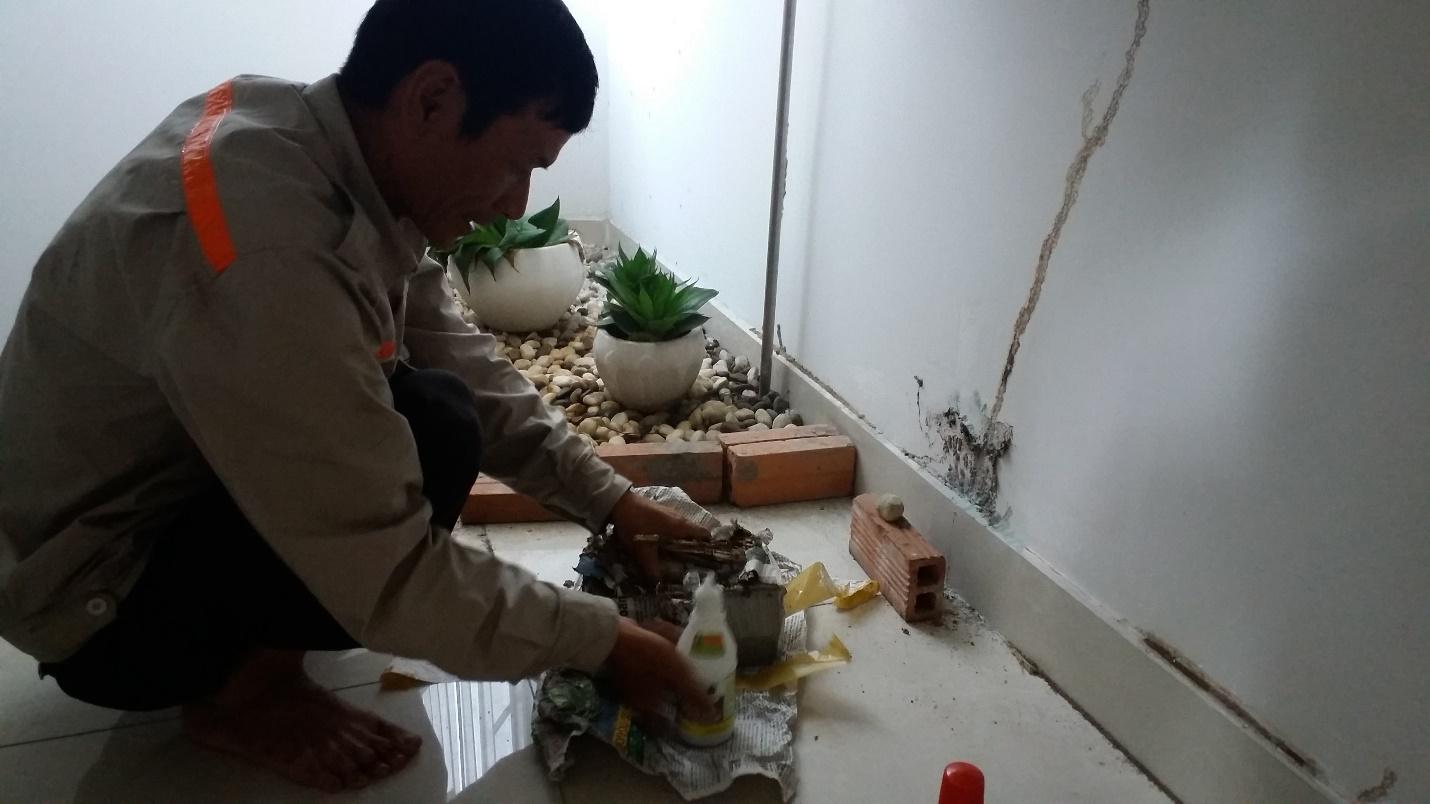 Dịch vụ diệt côn trùng quận Tân Phú