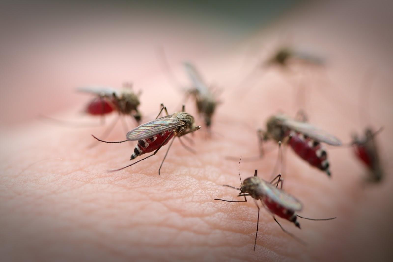 diệt côn trùng tại Gia Lai