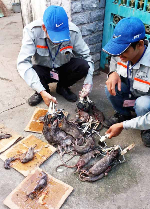 Diệt chuột tại Thanh Hóa