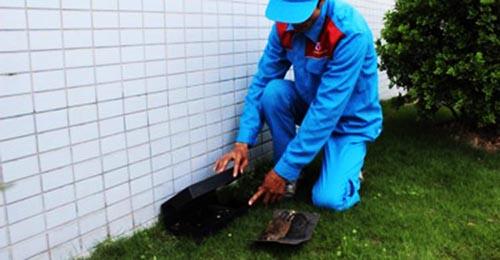Diệt chuột tại nhà ở Ninh Bình