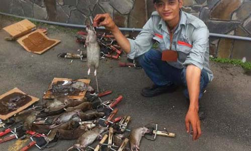 Dịch vụ diệt chuột hiệu quả tại Thái Nguyên
