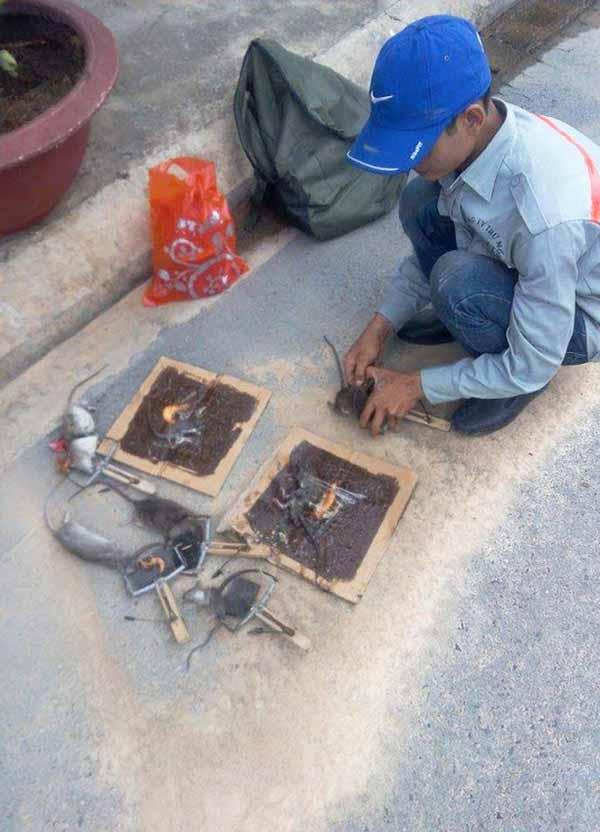 Diệt chuột hiệu quả tại Bắc Ninh