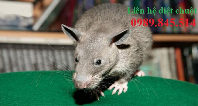 Dịch vụ diệt chuột Bình Phước