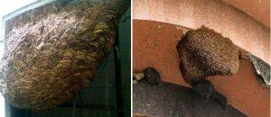 Đơn vị diệt ong tại tỉnh Bình Dương
