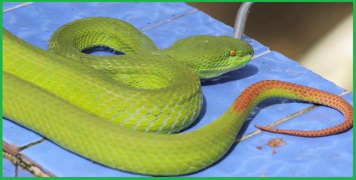 Công ty diệt rắn tại TP.HCM