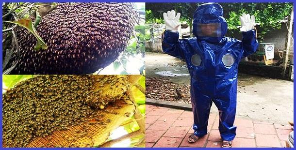 Dịch vụ bắt tổ ong cho nhà ở Cần Thơ