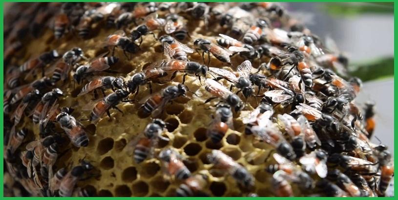 Dịch vụ bắt tổ ong tại TP.HCM