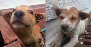 diệt bọ chét ve chó tại Hà Nội