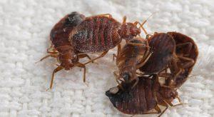 diệt rệp giường tại Hà Nội