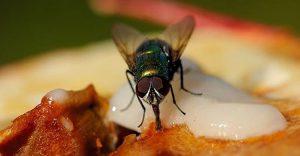 phun thuốc diệt ruồi tại Hải Phòng